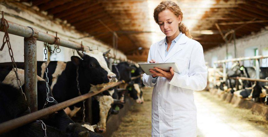 Online marketing voor de agrarische sector